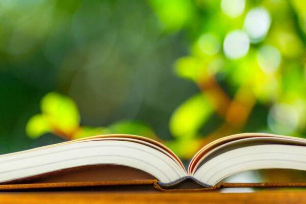パブロ ブルーノ物語を見て権利収入の基礎と情報選択の質を上げる!